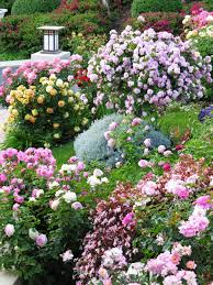 Small Picture Rose Garden With Outdoor Lights And Shrubs Stunning Rose Garden