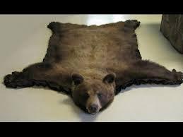 bear rug bear rug decorating ideas