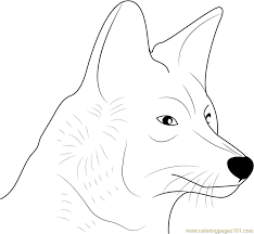 Small Picture Coyote Face Coloring Page Free Coyote Coloring Pages