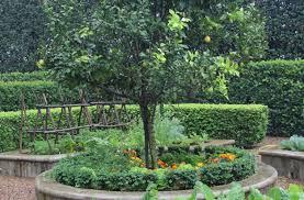 Growing Lemons Sa Garden And Home