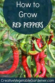 Organic Kitchen Garden 17 Best Images About Organic Kitchen Gardening On Pinterest