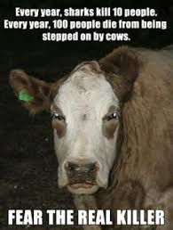mad cows on Pinterest | Meme, Burger Kings and Never Again via Relatably.com