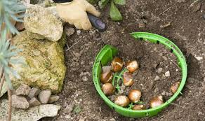 how to plant garden. planting how to plant garden
