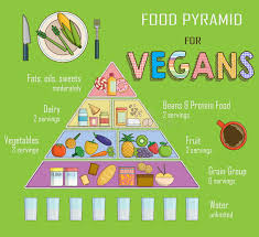 Infographic Chart Illustration Of A Food Pyramid For