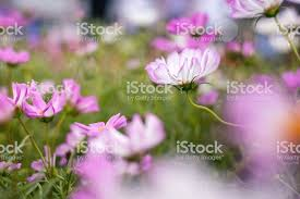 Grass and flowers background Full Hd Close Up Natural Flowers Background Amazing View Of Colorful Flowering In The Garden And Green Grass Landscape Overhead View With Copy Space And Template Istock Close Up Natural Flowers Background Amazing View Of Colorful