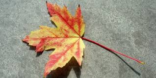 Mabon 2014: Six Ways To Celebrate The Pagan Autumnal Equinox ...