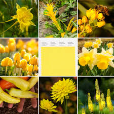 Denver Botanic Gardens - Did you see a Pantone 2021 #ColoroftheYear is this cheery yellow called Illuminating? Much needed after this year and a very easy color to coordinate with the Gardens'