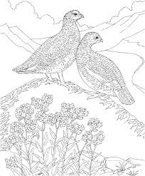 Free Printable Coloring Page - Alaska State Bird and Flower ...