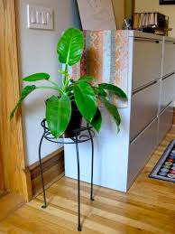 Office feng shui plants Jade Office Plant Office Plant Open Spaces Feng Shui