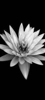Dark Flower Black Background iPhone X ...