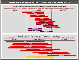 Blueberry Ripening Chart The Easy Way To Grow Raspberries Growing Raspberries