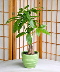 feng shui plant office. feng shui plants improve indoor air and create a comfortable atmosphere at home in the office how can you positive flow of energy your plant