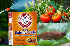 Baking soda naturally reduces acids and is a staple most people already have in their home. 30 Ways To Use Natural Baking Soda For Plants In The Garden