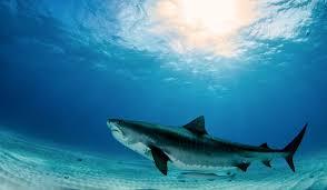 Samoan Fish Chart The 10 Largest Fish Species Living Today Worldatlas Com