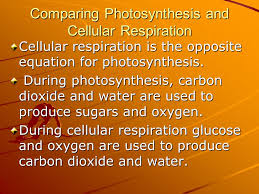 8 comparing photosynthesis and cellular respiration cellular respiration is the opposite equation for photosynthesis