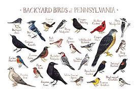 Backyard Birds Of Pennsylvania Field Guide Art Print
