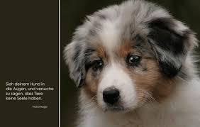 Zitate Tod Eines Hundes Wünsche Für Geburtstag