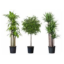 modern pot plants  fascinating ideas on beautiful modern flower