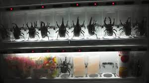 Crab Vending Machine China Unique 48 BIZARRE VENDING MACHINES