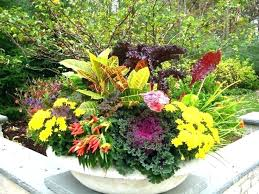 fall outdoor planters winter pot ideas plants for