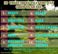 best garden vegetables. Top 10 Best Grow Low Light Sunlight Sun Vegetables Veggies Gardening Garden Herbs R