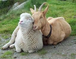 Image result for animals hug