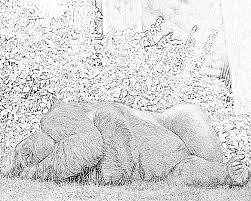 Coloriage Gorille Dos Argente 01 Imprimer Pour Les Enfants Dessin