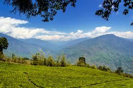 Temi Tea Garden Wikipedia