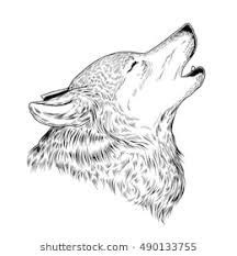 wolf drawing. Exellent Drawing Vector Illustration Of A Howling Wolf Engraving Print For Tshirts And Wolf Drawing W