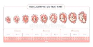 Pregnancy Chart In Months Pregnancy Month Weeks And Trimesters Chart With Stages Of