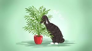 indoor plants safe for cats as much i love never had many two reasons terrible at indoor plants safe for cats