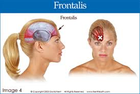 frontalis copyright stock photo register mark