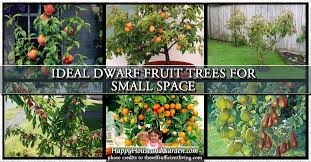 fruit trees for small gardens uk garden designs
