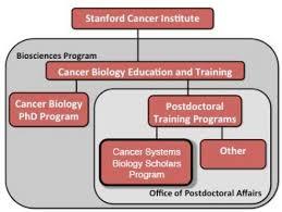 Stanford Hospital Organizational Chart About Cancer Systems Biology Scholars Csbs Program