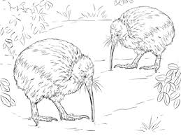 Small Picture North Island Brown Kiwi coloring page Free Printable Coloring Pages
