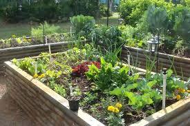 vegetable gardening in florida best ideas vegetable gardening in for beginners design vegetable gardening in winter