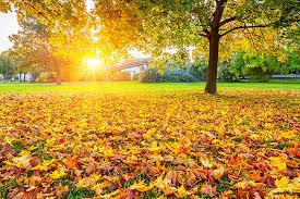 Fall Gardening Tips From The ExpertsFall Gardening