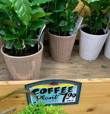Every moment matters if you think your cat has been exposed to something toxic. Trader Joe S Is Selling Coffee Plants For 8