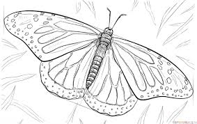 drawing butterfly pictures. Simple Drawing And Drawing Butterfly Pictures U