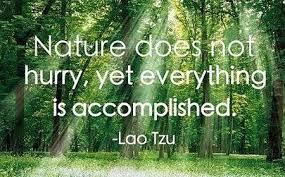 Image result for lao tzu quotes