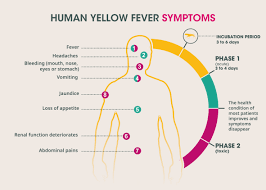 Yellow Fever Chart Yellow Fever Sanofi