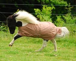 Eous Lightweight Foal Mini Blanket Equisupplies Llc