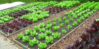 Small Picture Healthy Life with Organic Foods Your Own Organic Garden with