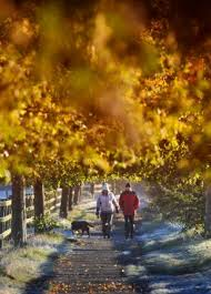 people living in the countryside are happier and more optimistic  dog owners walk their dog in cheshire