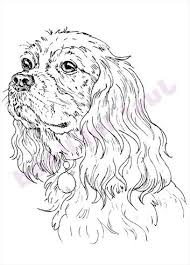 Hond Cavalier King Charles Tekeningen Google Zoeken Kleurplaten
