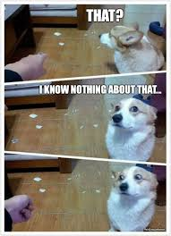 Guilty Dog Is Guilty – Meme | WeKnowMemes via Relatably.com