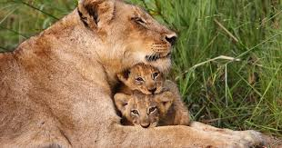 her cubs discovered by sy lastname