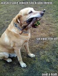 Image result for funny animals