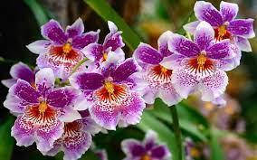 hd wallpaper beautiful nature flowers