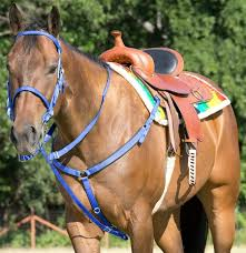 mustang bridle and go tack set blue